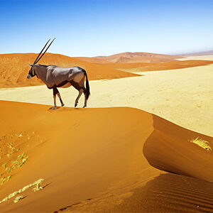 Namibia & Southern Africa